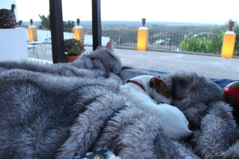 Kurztrip nach Portugal, Casa da Moira in Avis. Kuscheln auf der Terrasse mit dem kleinen Hund